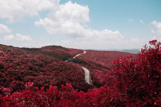 Farbideen Wände rot Herbstwald