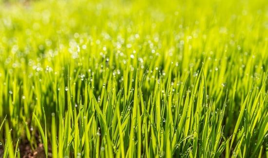 Wände streichen gelbgrün Gras