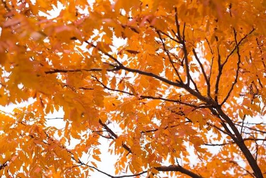 Wände streichen orange Herbstblätter
