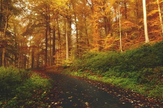Wandfarben Ideen orange Herbstlaub
