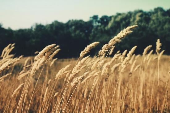 Wohnraumfarben braun Getreide